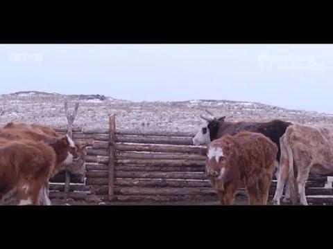 Сэлэнгэ аймгийн Мандал суманд шүлхийн хорио цээрийн дэглэм үргэлжилж байна