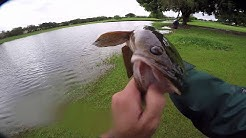 Fishing for big Bullseye Snakeheads in South Florida with topwater frogs.