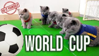 🏆Чемпионат Мира по Футболу | Британские Котята Играют в Футбол ⚽️ Матч 2020 | Игра Своими Руками