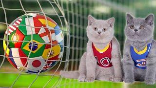 🏆World Cup Cats | Cute Kittens Play Football ⚽️ Match 2020 | Cat Soccer Game DIY | British Shorthair