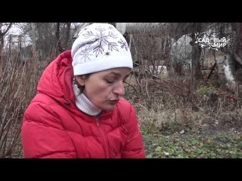 видео: Подзимний посев эхинацеи и других цветов. Сайт