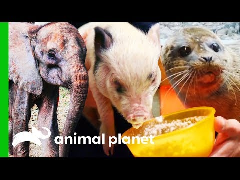 The Most Heartwarming Animal Rescues! (Compilation) | Dodo Heroes
