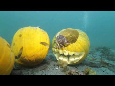 Shore Diving | 2016 Spooktacular Pumpkin Dive - Surprise Guests