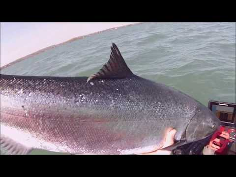 Kayak Trolling Lake Ontario For Salmon