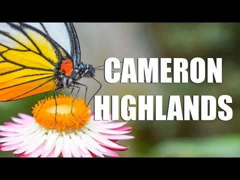 DAY TRIP AROUND CAMERON HIGHLANDS - BUTTERFLY & STRAWBERRY FARMS