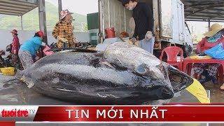 Đánh bắt tại vùng biển Trường Sa ngư dân Khánh Hòa trúng đậm cá ngừ