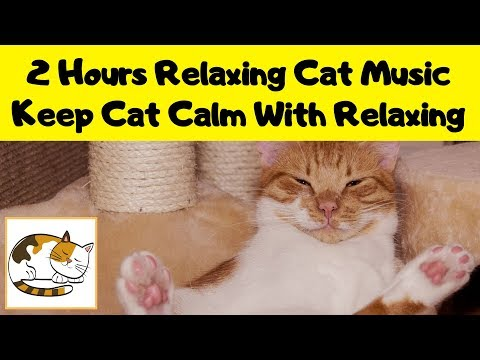 2 Hours Relaxing Cat Music - Help Keep Your Cat Calm With Relaxing Music