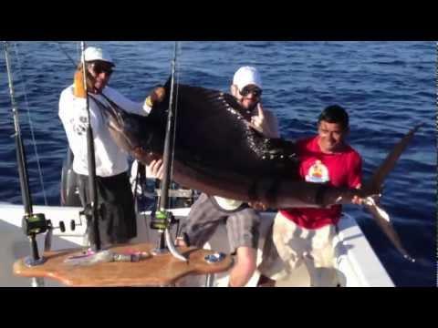 Jackie vs the Sailfish