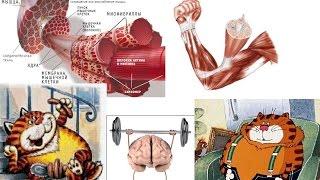 Бодитюнинг. День 11.0. О чувствительности мышечных клеток к гормонам, глюкозе и тренировкам