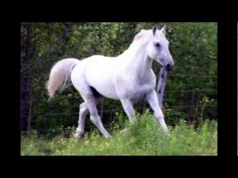 (los bohemios de garupa) mi caballo blanco