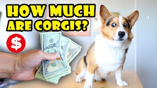 This is How Much a CORGI Costs Today || Life After College: Ep. 684