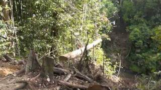 Bridge Building In Imbak Canyon - Log 3