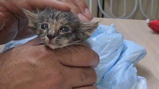 До слёз/Боремся за жизнь котёнка/Их выбросила бабушка/За что им такое?