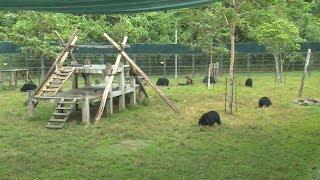 Vì môi trường bền vững: Chặng đường dài bảo tồn loài gấu tại Việt Nam