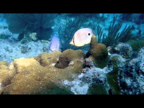 Key West, Western Dry Rocks Reef buoy#5 1996