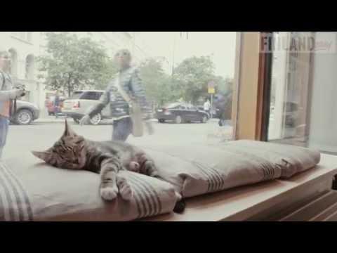 Cat Café Helsinki / Kissakahvila