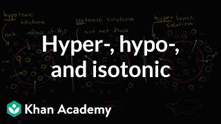 Hypotonic, isotonic, and hypertonic solutions (tonicity) | Khan Academy