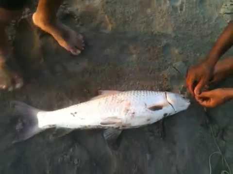 5 Kg Mirgal Fishing In Pakistan By KhanGroup At Tiba Qaim Din 5