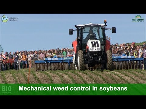 Machine Demonstration: Mechanical Weed Control In Soybeans