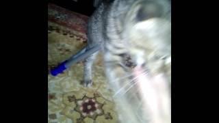Мой котёнок Тигр кусает мне руку.