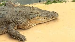 Самые большие животные в мире!