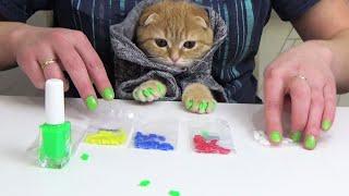 Котенок Фокси на маникюре выбирает цвета и меряет новую одежду Блог кота cat vs manicure