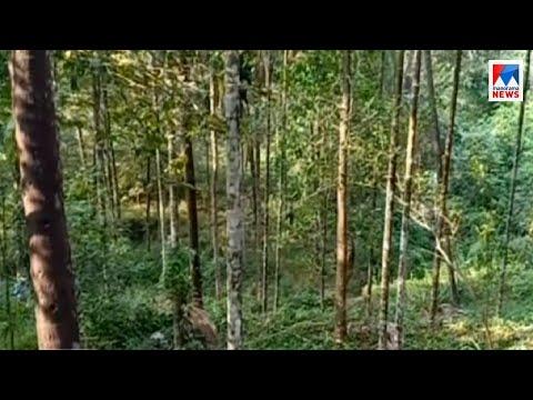 Kozhikode Chaakkittapara - Tiger