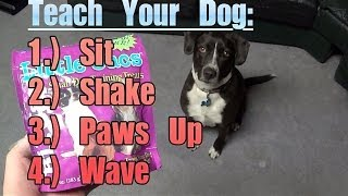 How To: Teach Your Dog Sit, Shake, Paws Up, And Wave