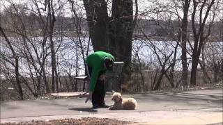 Freya (labradoodle) Puppy Camp Trained Dog Video