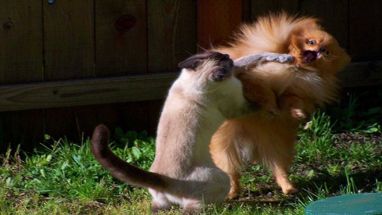 Картинки животные против животных если