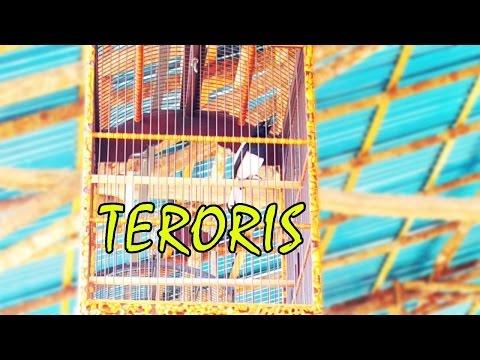 Suara Burung Kacer Teroris Milik Opan PLB di LatBer Pantura Singkawang