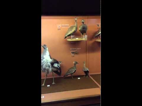 Birds of Southern Africa species 1 to 800 plus