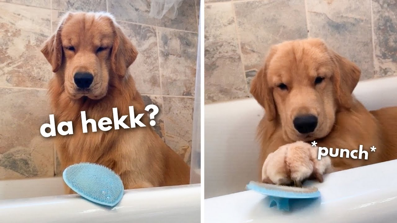 My Dog Reacts to Face Scrubber