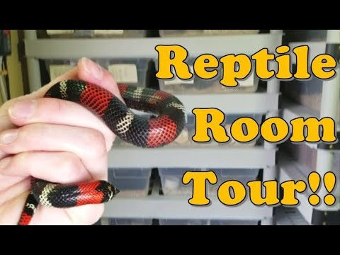 Reptile Room Tour Part 1 Youtube