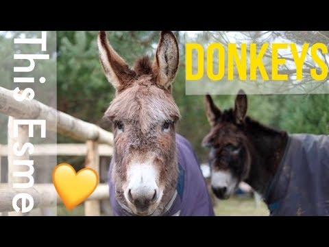 Having Donkeys   This Esme - YouTube