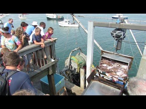 Free Fun At The Chatham Fish Pier