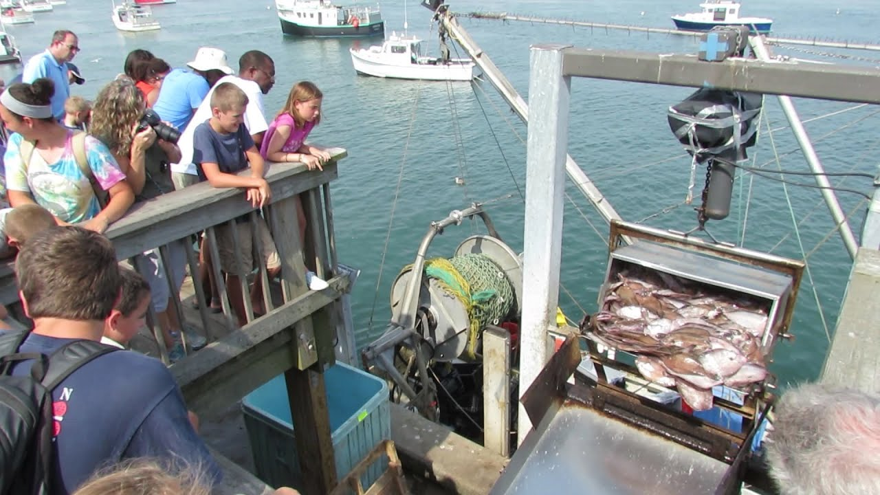 chatham fish pier cam
