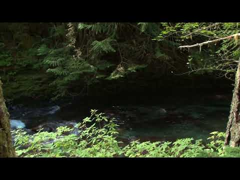 "3 HOURS""Water Streaming In Dense Forest""-Relaxing Nature Video-Small River Sleep Sound"
