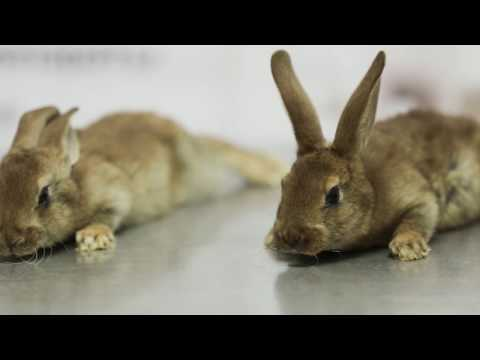 Вакцина ВГБКМ ассоциированная сухая для кроликов, уп. 10