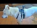 GoPro Dog Harness Test
