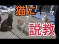 【激カワ】遊ばない猫たちにまさかの説教!そしてその効果が…?