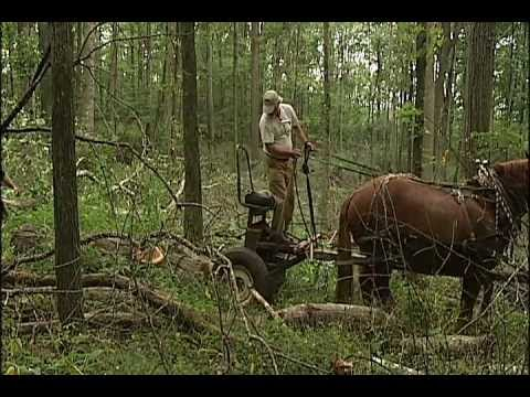 John Carlin's Virginia: Horse Logging