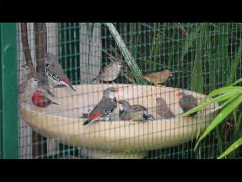 finch bird eggs