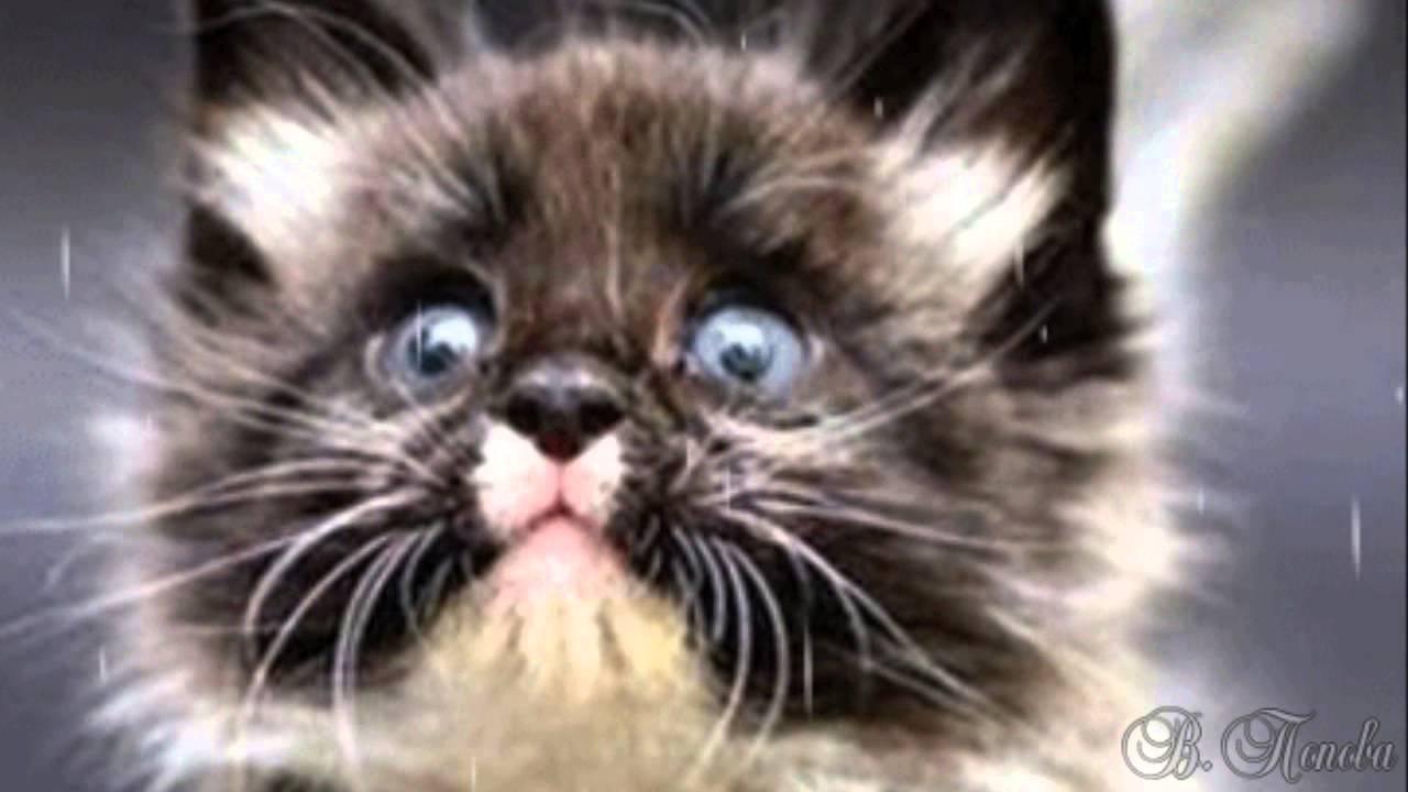 я пушистый маленький котенок не ловил