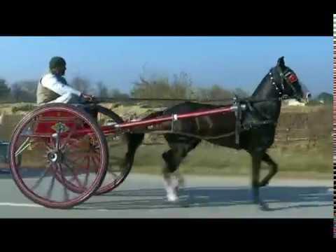HASHIM KHAN HORSE BASHA ....