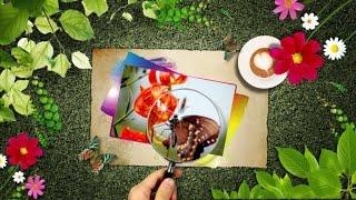 Цветы и бабочки для любимой подруги!