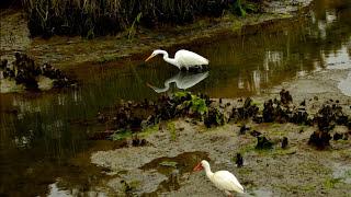 South Carolina Great Are You Lord Coastal Birds