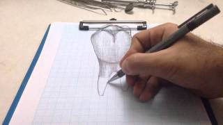 3D tooth drawing