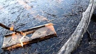 Плотик для отлова ондатры