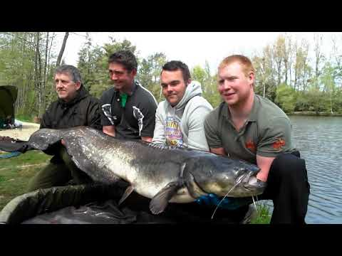 First Catfish At 75lbs For Duncan At Beausoleil French Carp And Cats